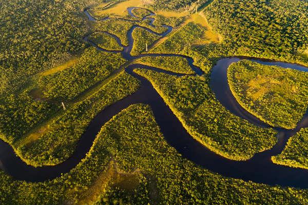 A Floresta Amazônica é importante para o clima do planeta e também é rica em biodiversidade.