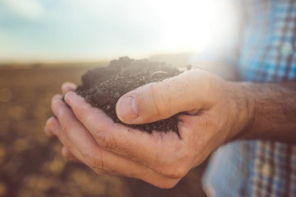 A reforma agrária beneficia os pequenos agricultores e favorece o reconhecimento do valor social da terra.