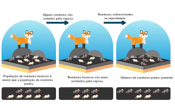Os roedores pretos são mais aptos a viver nesse ambiente que os roedores brancos.