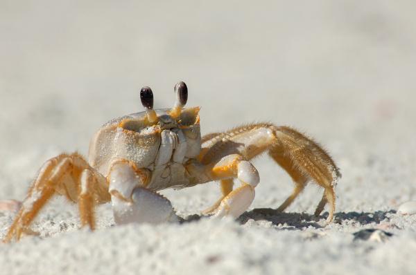Nos crustáceos é possível observar um exoesqueleto mais resistente devido à presença de carbonato de cálcio.