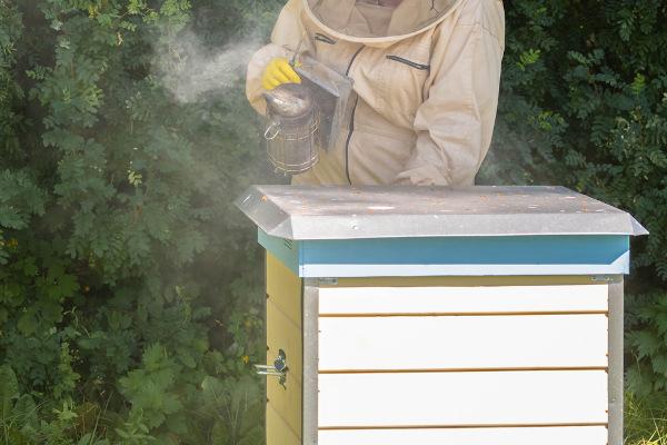 Fumaça utilizada na apicultura para acalmar as abelhas no manejo das colmeias.