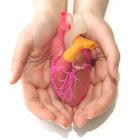 mãos seguram uma representação de coração