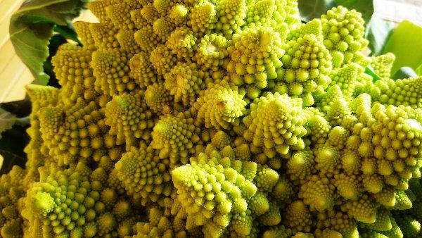 Os fractais são bastante comuns na natureza.
