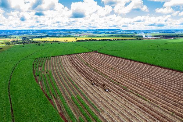 A cana-de-açúcar e o etanol são destaques da economia do estado de Goiás.