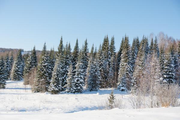 A Taiga é típica de ambientes frios.