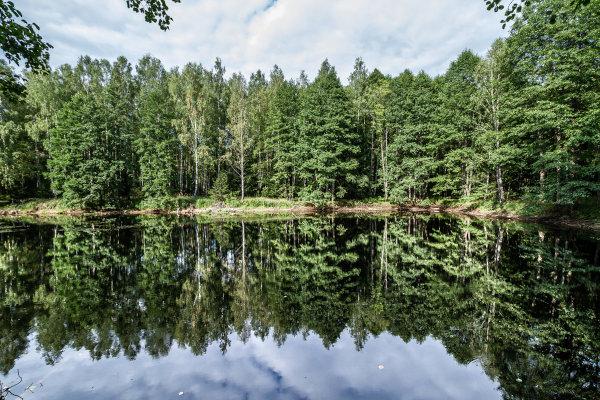 O Parque de Belovezhskaya possui árvores centenárias e grande diversidade faunística.