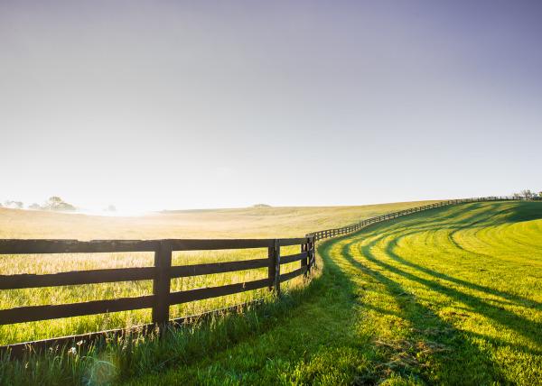 Foto de um pasto dividido por uma cerca.