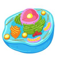 ilustração de célula eucarionte