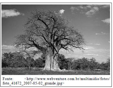 Foto de uma baobá.