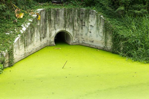 Corpo de água infestado por algas.