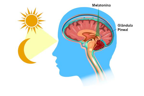 Esquema ilustrativo da produção de melatonina pela glândula pineal durante a noite