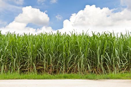 A produção de cana-de-açúcar pode causar inúmeros problemas de ordem social, ambiental e econômica.