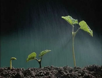 As condições do solo e do ambiente interferem muito na germinação dos vegetais