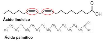 Figura ilustrando a cadeia saturada, com ligações simples; e a cadeia insaturada, com ligações duplas