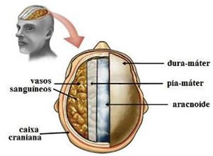 As meninges: dura-máter, pia-máter e aracnoide