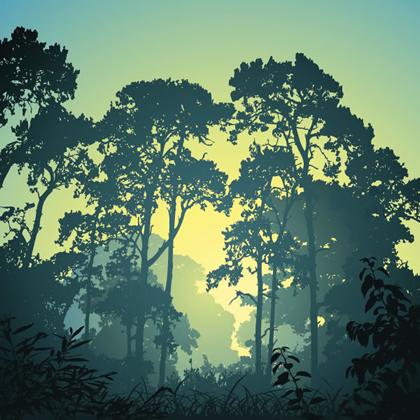 No dia 21 de março é celebrado o Dia Internacional das Florestas