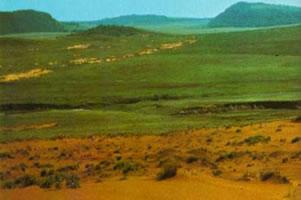 Campos - vegetação presente no Rio Grande do Sul