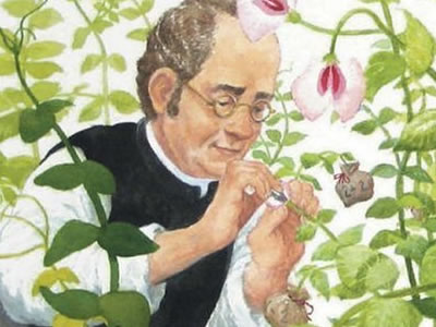 Gregor Mendel realizando experimentos com ervilhas.