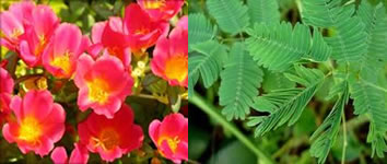 No nastismo, a direção do estímulo não influencia no movimento do vegetal.
