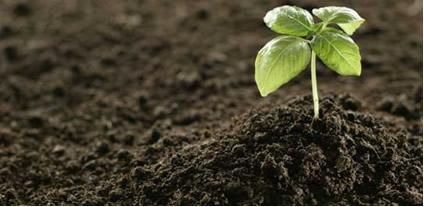 Para crescer, a planta precisa de nutrientes que podem ser fornecidos por meio dos adubos