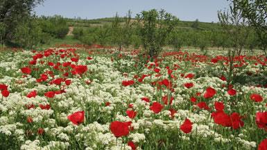 Primavera: a estação das flores