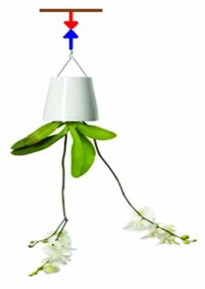 Vaso de planta pendurado no teto