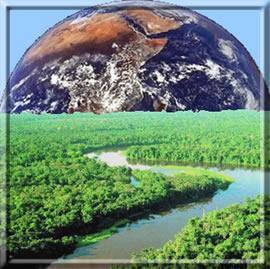 As árvores merecem respeito de todo o mundo