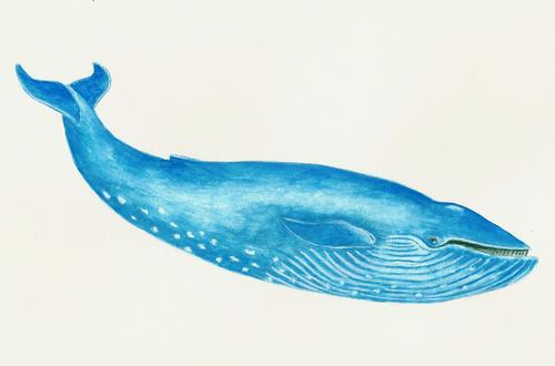 Resultado de imagem para baleia azul