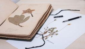 Criação de herbário na escola