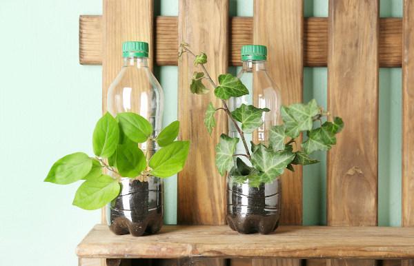 Garrafas pet podem ser reutilizadas na fabricação de vasos de planta.