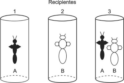 Representação de três recipientes contendo espécies de insetos