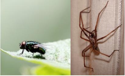 Mosca e aranha também conseguem subir em paredes pelas forças de van der Waals