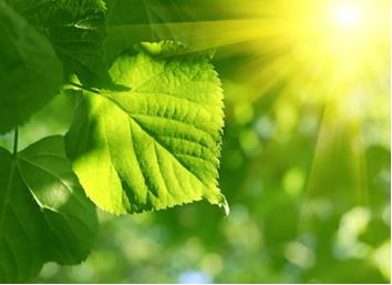 O processo de fotossíntese das plantas transforma moléculas inorgânicas em moléculas orgânicas