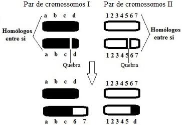 Desenho esquemático de um tipo de mutação cromossômica