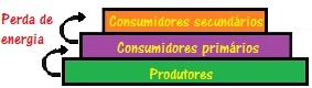 Os produtores representam o nível energético mais elevado