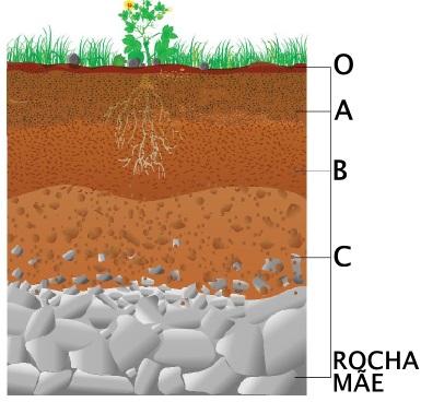 Os perfis ou horizontes do solo representam diferentes características de um mesmo elemento