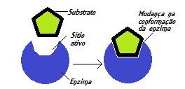 Segundo o modelo do encaixe induzido, o substrato induz mudanças na enzima