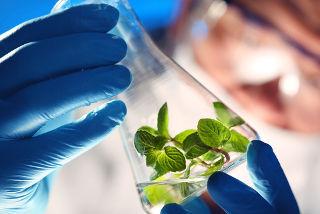 O engenheiro químico também analisa os impactos sobre o meio ambiente