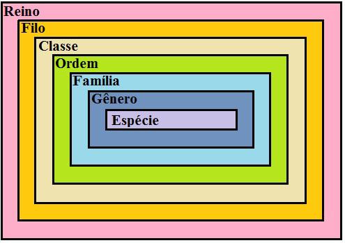Observe as categorias taxonômicas básicas e suas relações