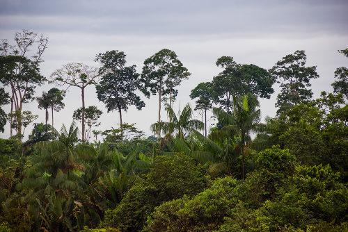 A Amazônia é o maior bioma brasileiro