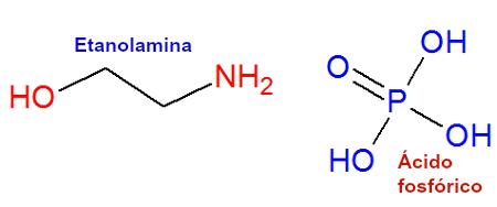 Etanolamina e ácido fosfórico são utilizados para produzir Fosfoetanolamina