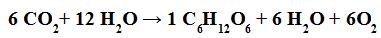 Equação química que representa a fotossíntese