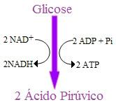 A glicólise é o processo em que a glicose é usada para a formação de ácido pirúvico
