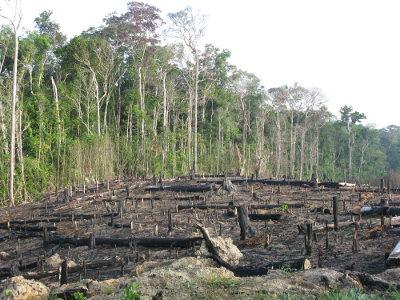 O desmatamento na Floresta Amazônica causa perda de biodiversidade e prejudica as comunidades locais que vivem dos recursos da floresta