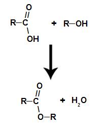 Equação química que representa a formação de um éster