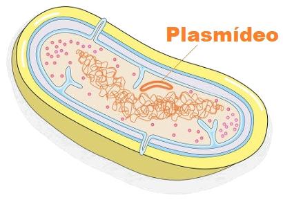 O plasmídeo é um DNA circular extracromossomial