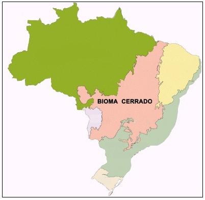 O bioma Cerrado localiza-se no Brasil Central, compreendendo dez estados brasileiros.