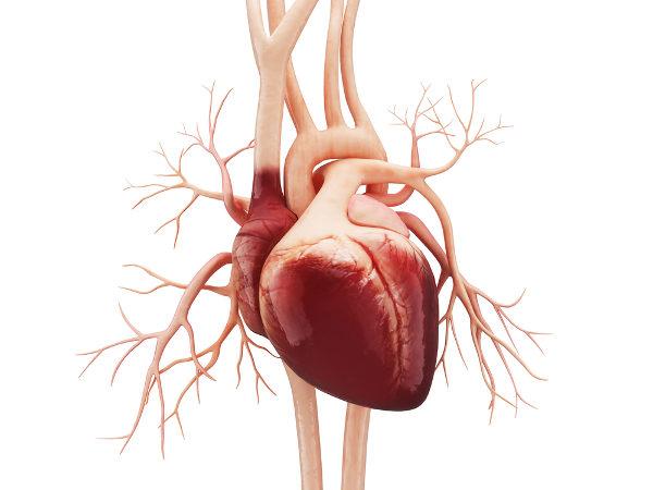 O coração é um órgão muscular responsável pelo bombeamento do sangue para o corpo.