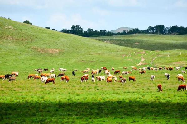A pecuária extensiva representa a criação de grandes rebanhos em grandes áreas, em um regime livre e sem tratamento especial.