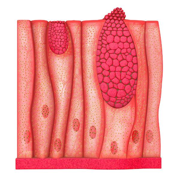 O tecido epitelial caracteriza-se pela presença de células próximas umas das outras.